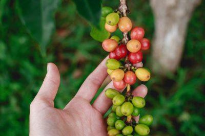 Common Coffee Roasts