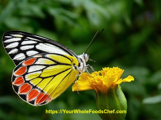 Finding the Beauty Within While Dieting